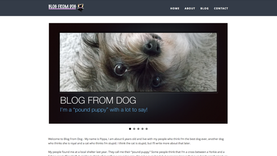 Blog From Dog